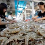 China Points to Shrimp as Covid-19 Carrier After Salmon Debacle